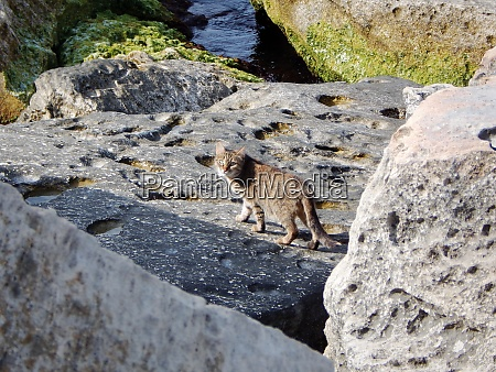 stray cat in coastal cliffs