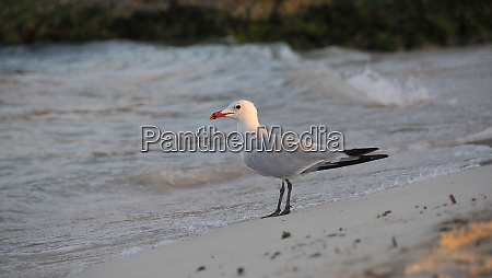 bird on the beach of menorca