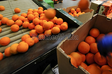logistics and packaging of oranges