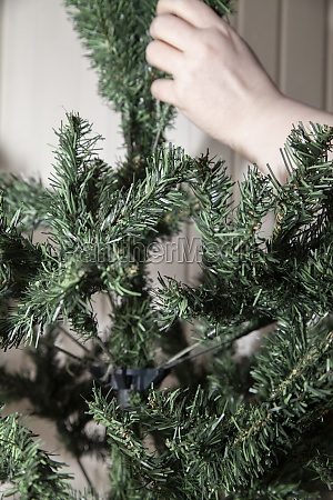woman fluffing out christmas tree limbs