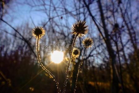 shining plants in the warm sun