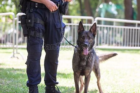 policeman with belgian shepherd police dog