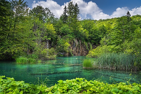green plants and turquoise coloured lake