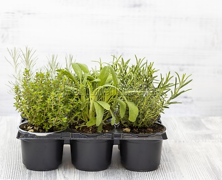 mix of herbs in a pot