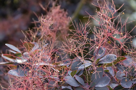 reddish foliage closeup