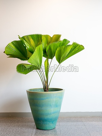 the small tree in a pot