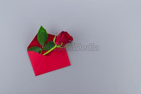 red rose in envelope on gray