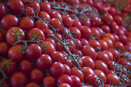 red and ripe tomato vegetable