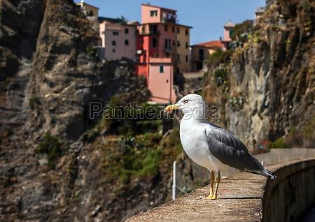 seagull in riomaggiore