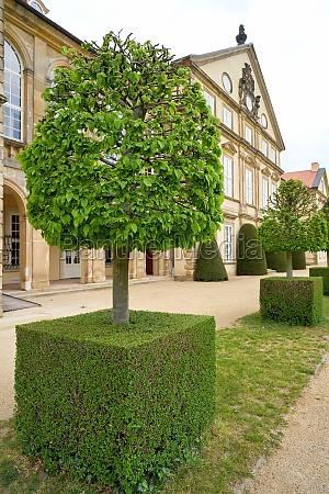 horticulturally designed hornbeam in the park