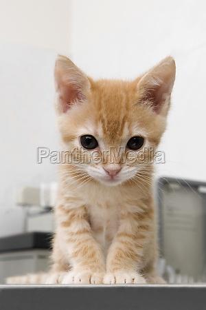 closeup of a cat sitting in