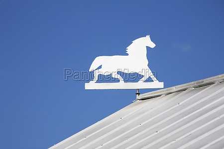 cut out of horse on the