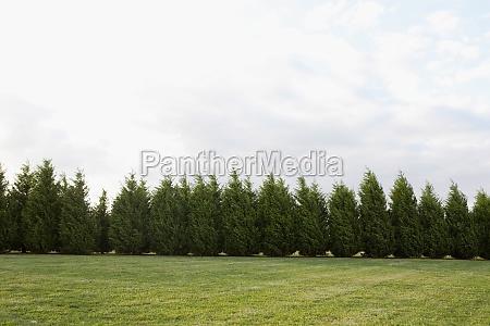tree hedge in a field