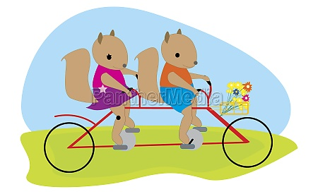 male squirrel and female squirrel riding