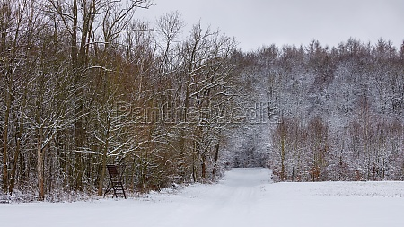 forest in the wintertime with snow