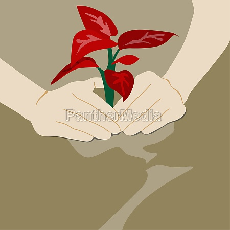 personZs hand planting a sapling
