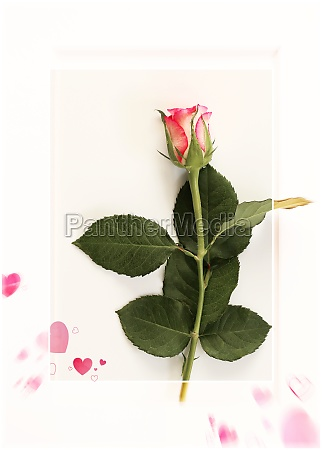 love card valentines day greeting card