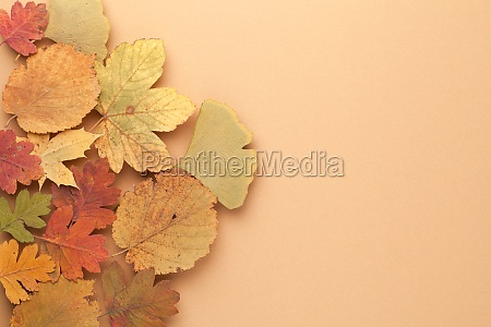 colorful leaves concept as autumn background