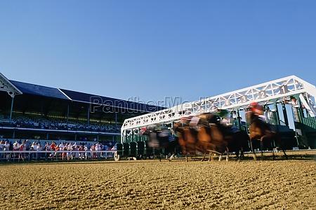 jockeys riding their horses on a
