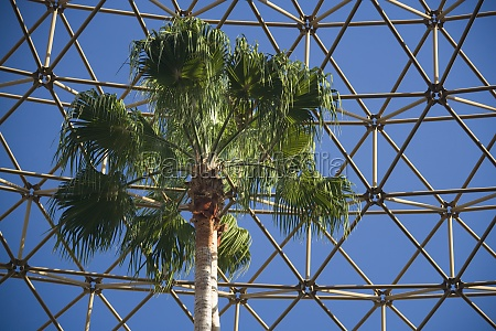 palm tree in front of an