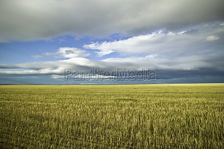 clouds over a cultivated field