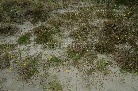 vegetation covering the sand