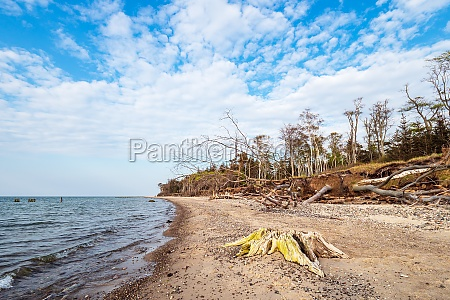 beach on shore of the baltic