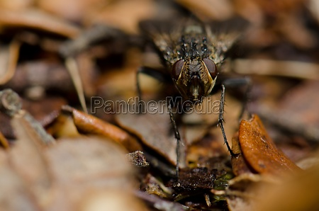 fly on the forest floor