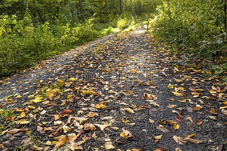 leaves on a path in autumn