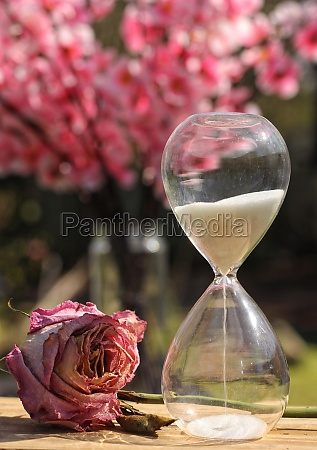 rose and hourglass
