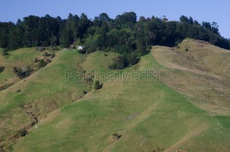 landscape in otago peninsula