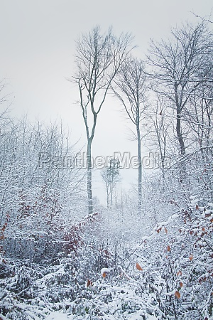 foggy winter landscape in a forest
