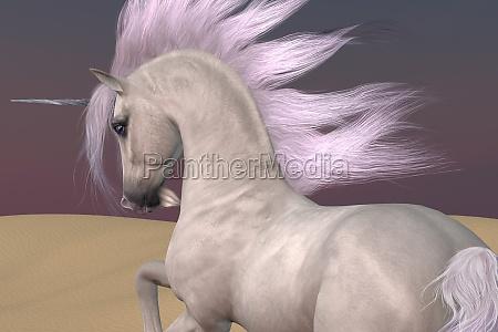 arabian unicorn dreams