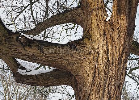 tree tree trunk winter