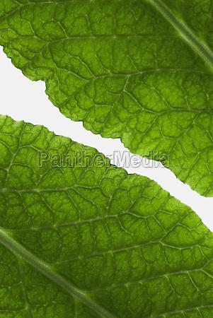closeup of leaves