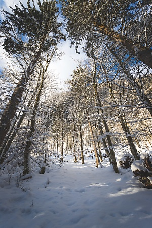 winter landscape in the nature footpath