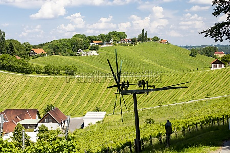 vineyard with windmill called klapotetz in