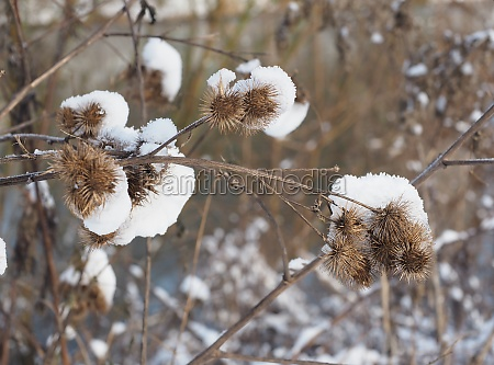 plant with snow hood