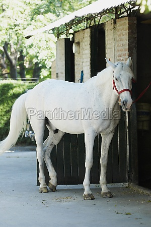 horse standing in front of a