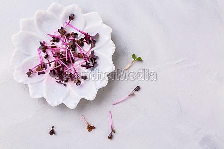 purple shiso cress on grey plate