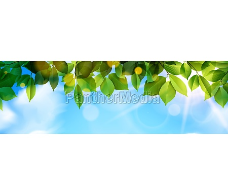 green leaves and sunbeam panorama background