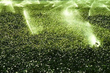 high angle view of sprinklers spraying