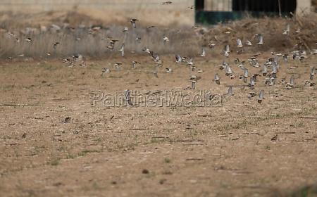 flock of birds in flight in