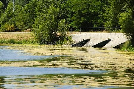 duckweed floating on water bordeaux lake