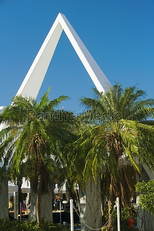palm trees in front of a
