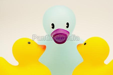 close up of three rubber ducks