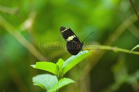 close up of a doris butterfly