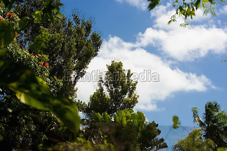 low angle view of trees key