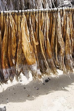 tobacco leaves drying kona big island