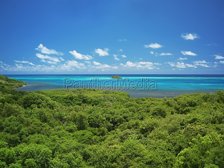 high angle view of trees at